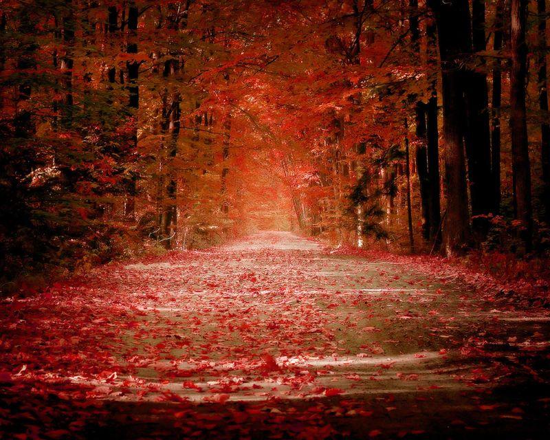 Autumn_valley_1280x1024_wallpaper_by_sicanstudios.com