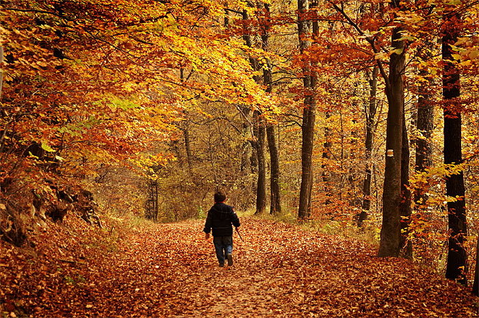 Walk in autumn woods