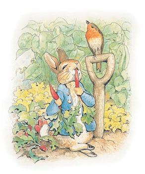Peter rabbit and carrots