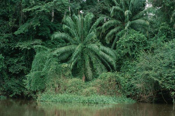 Rainforest_Congo_By-Lee-Klinger_UCAR