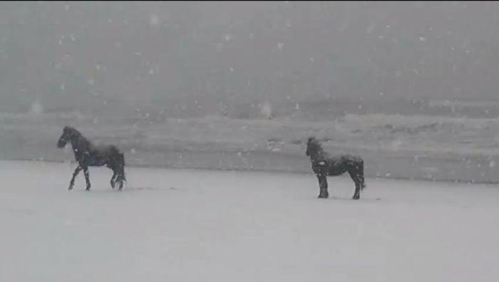 Corrolla horse in snow 3