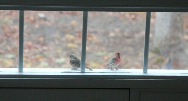 Two birds over transom