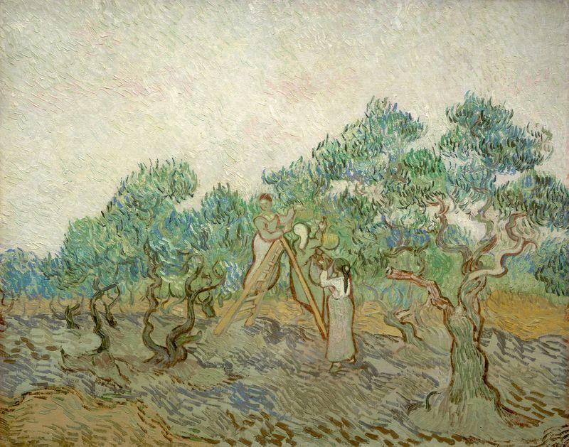 Vg-olive-orchard