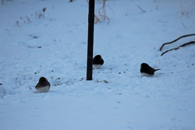 A gathering in the snow
