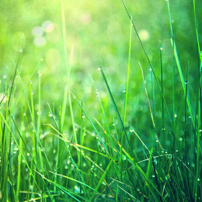 Spring-green-grass-dirk-wstenhagen-imagery